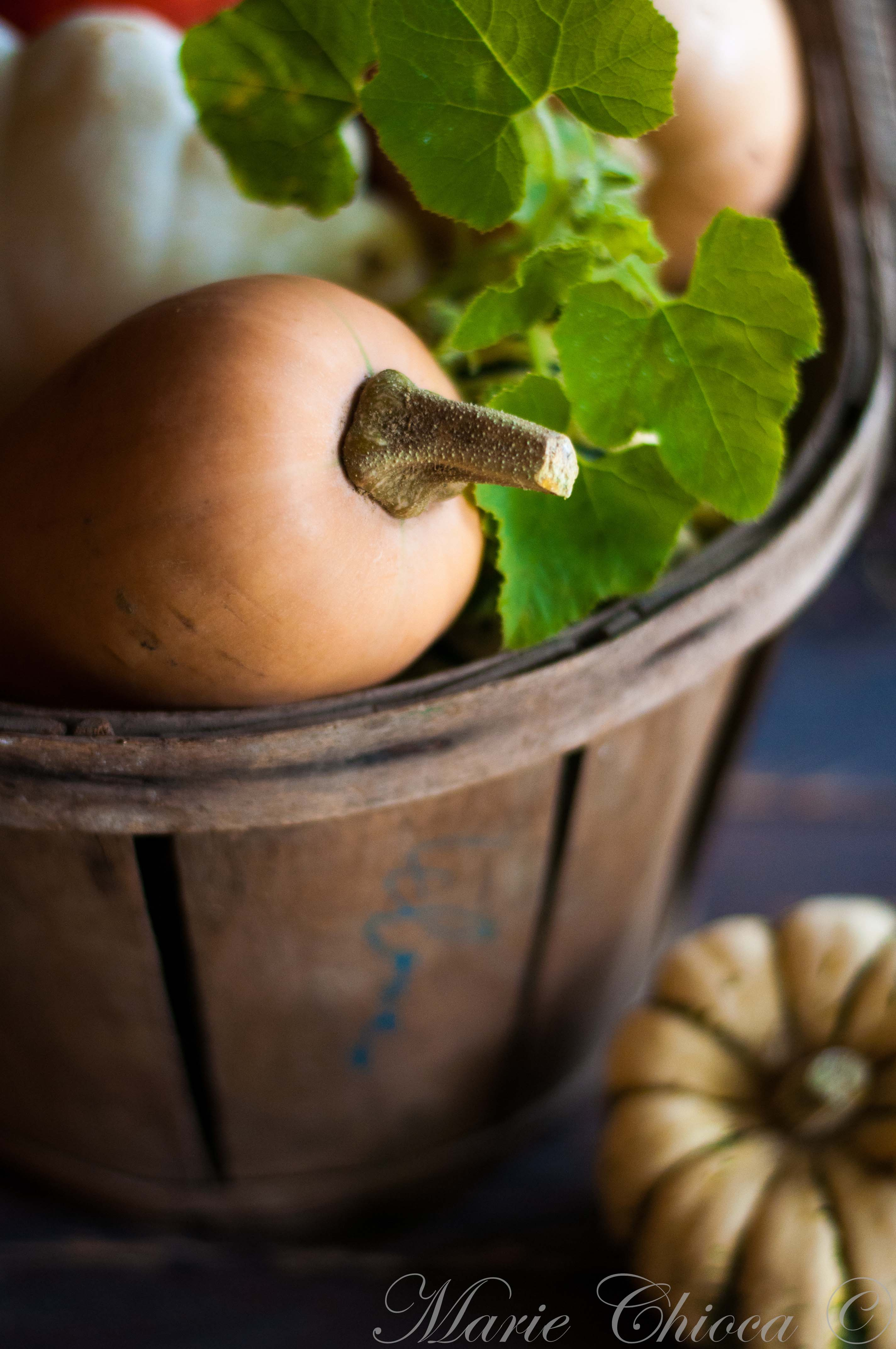 courge-butternut-2