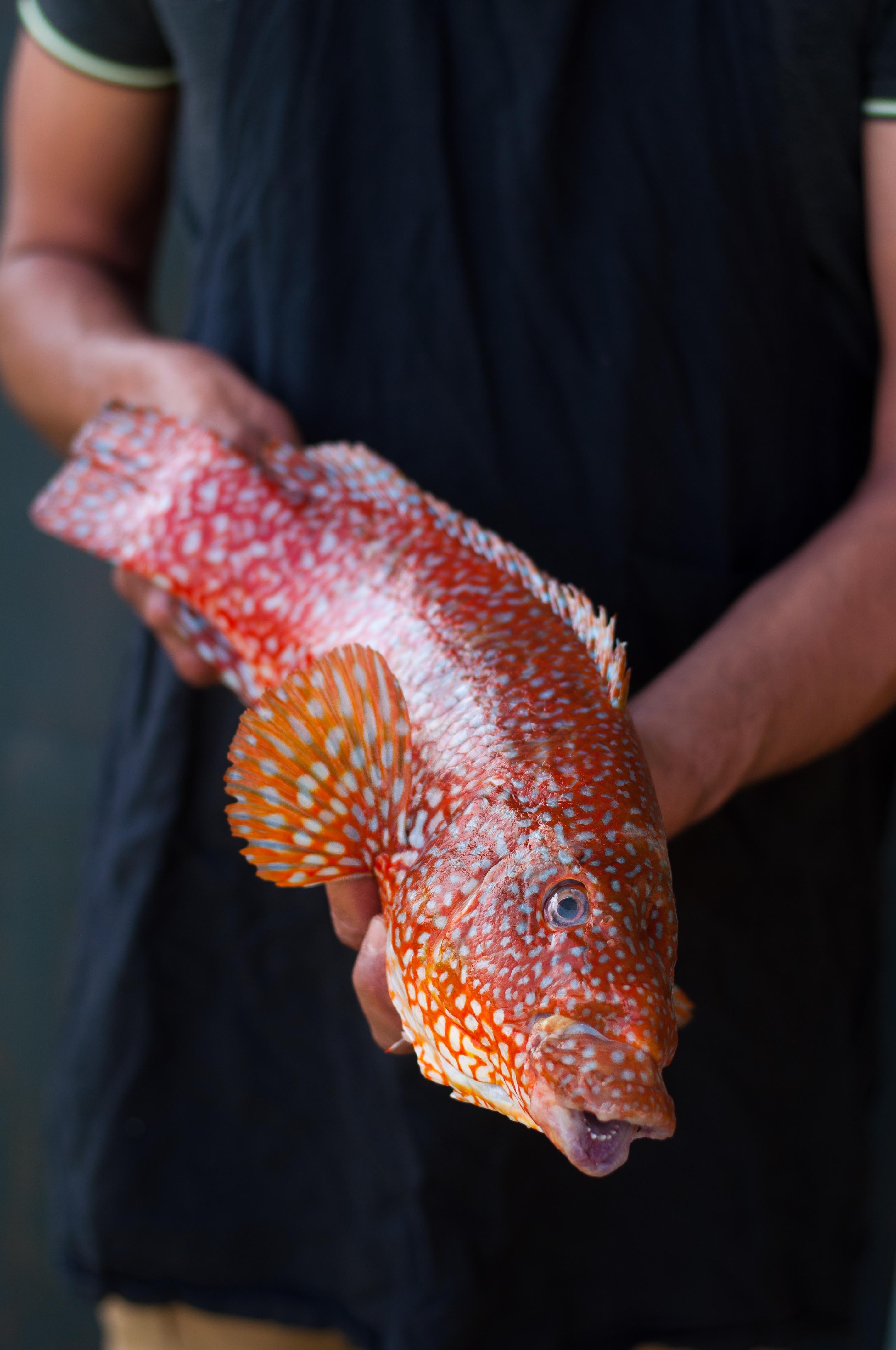 Livre poissons et autres produits de la mer 1