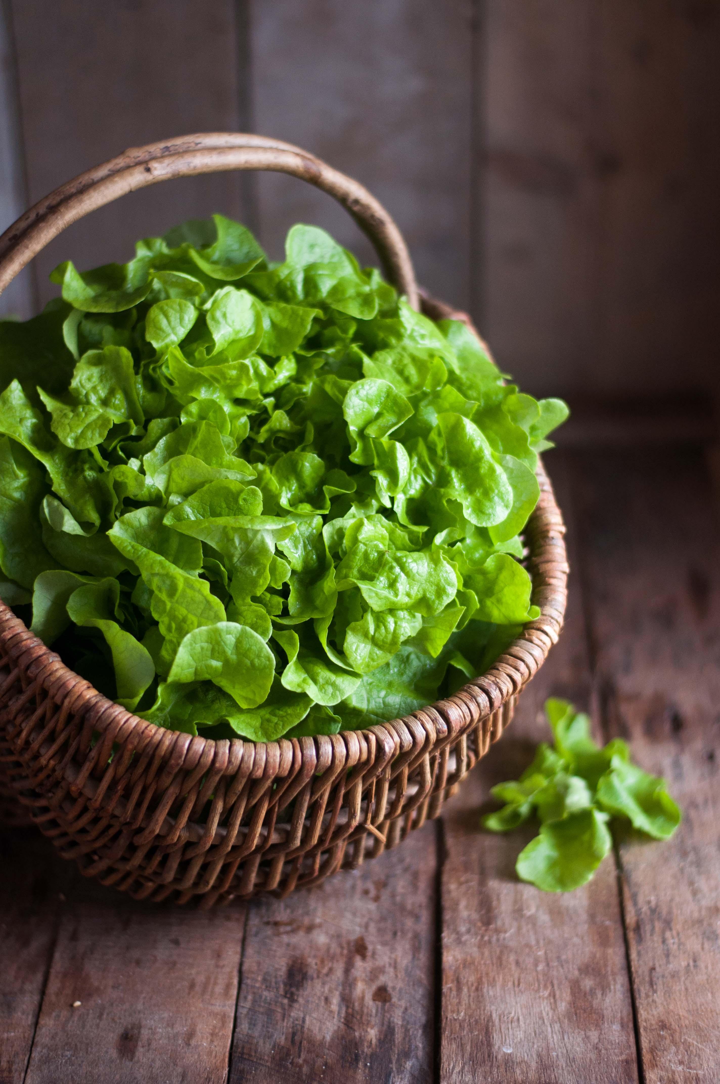 Ma petite saladerie à la maison, Marie Chioca, Terre Vivante3