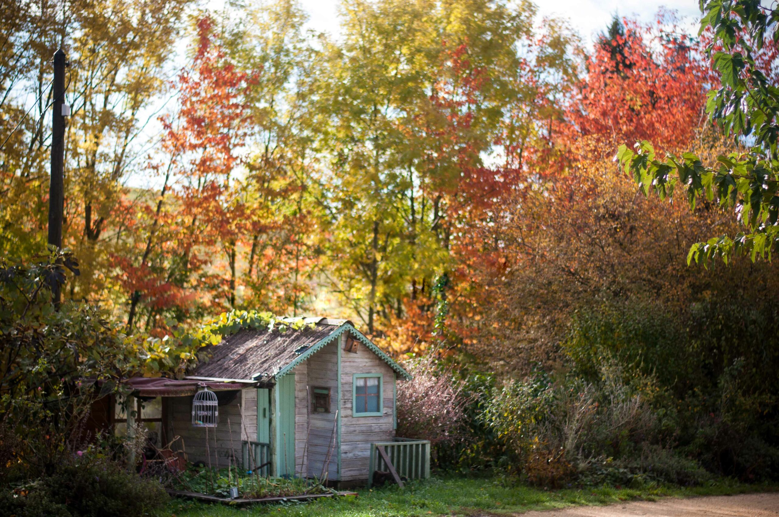 petite maison dans les bois en automne